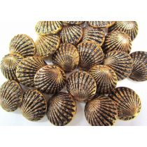 Bronze Shell Couture Buttons- CB230